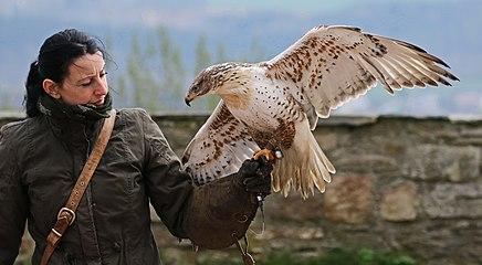 Vogelflugschau im Schloß Augustusburg. 2998WI1.jpg