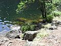 Vylet k Cernemu jezeru Sumava - 9.srpna 2010 199.JPG