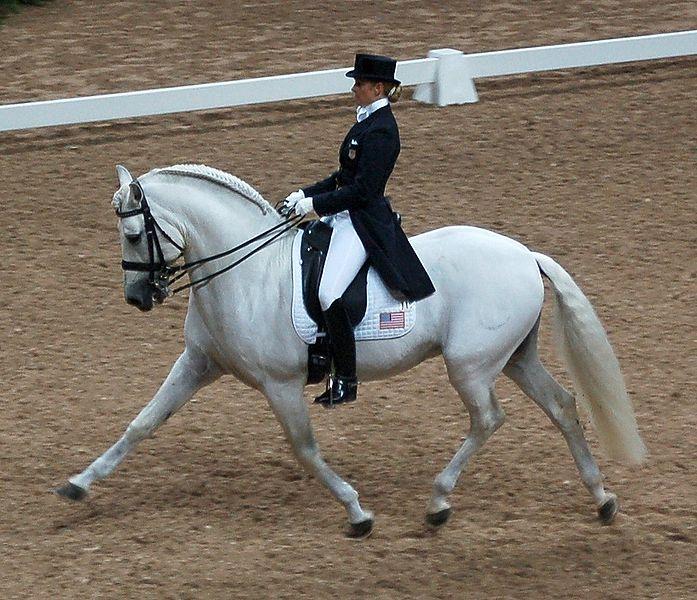 Выездка - вид конного спорта, высшая школа верховой езды.  На соревнованиях по выездке всадник и лошадь.