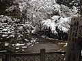 Way in Sokenji Temple in a snowy day.JPG