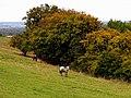 Wayfarer's Walk - geograph.org.uk - 62417.jpg