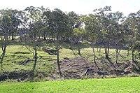 Weabonga mullock heaps