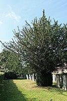 Weener - Unnerlohne - Jüdischer Friedhof 05 ies.jpg