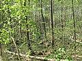 Weisser See (Buckow) Bruchwald 02.jpg