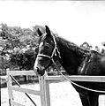 Werner Haberkorn - Cavalo 2.jpg
