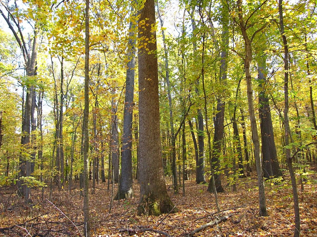 Wesselman Woods Nature Preserve - Wikipedia