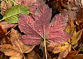 Wet autumn leaves 573.jpg