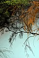 Whakarewarewa 17.jpg