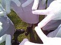 White knit gloves.jpg