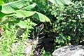 Wikipedia 13. Fotoworkshop Botanischer Garten Erlangen 2013 by-RaBoe 005.jpg