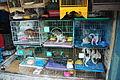 Wildlife trade - puppy mill.jpg