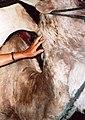 Woman's Hand and Camel -Mogador.jpg