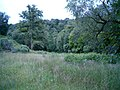 Wooded meadow - geograph.org.uk - 200309.jpg