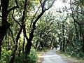 Woods Dundo - Kampor, Hrvatska - panoramio.jpg