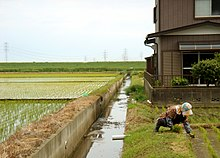 Working in the Rice Paddies in May, 2.jpg