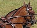 World Equestrian Games Driving 05.jpg