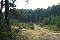 Wrzosowe wydmy, Puszcza Notecka, okolice Chojna (11).JPG