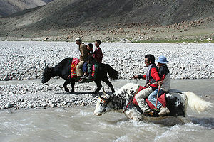 Shimshal - Image: Yak Race