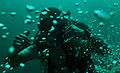 Year of the Military Diver 150430-N-GO855-026.jpg