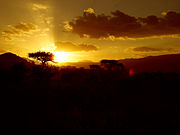 Yellow sunset at Tsavo East National Park