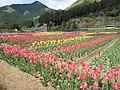Yodel Forest Tulip.JPG