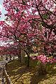 Yogi Park Naha Okinawa Japan01s5.jpg