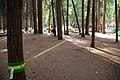 Yosemite Camp Four-6.jpg