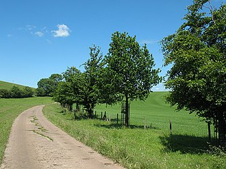 Wharton, Cumbria - Image: Young trees on the drive of Wharton Hall geograph.org.uk 1398532