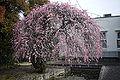 Yumeji Art Museum04s5s4000.jpg