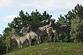 Zebrák domboldalon.jpg