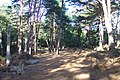 'Silent Valley' on Brownsea Island - geograph.org.uk - 636415.jpg