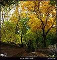 (((پاییز در کوچه باغهای مراغه ))) - panoramio.jpg