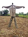 ÉPOUVANTAIL DANS UN CHAMP AU BENIN.jpg