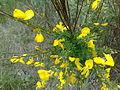 Żółte kwiatki yellow flowers.jpg