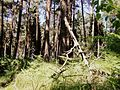 Żwakowski las. - panoramio.jpg