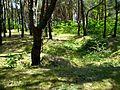 Акопы ў лесе - panoramio.jpg