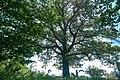 Андріївський ліс 11.jpg