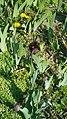 БотаническийСадCH1.jpg