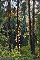 Ботанічний сад Національного аграрного університету Київ 03.jpg