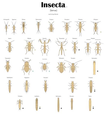 insecte pe penis