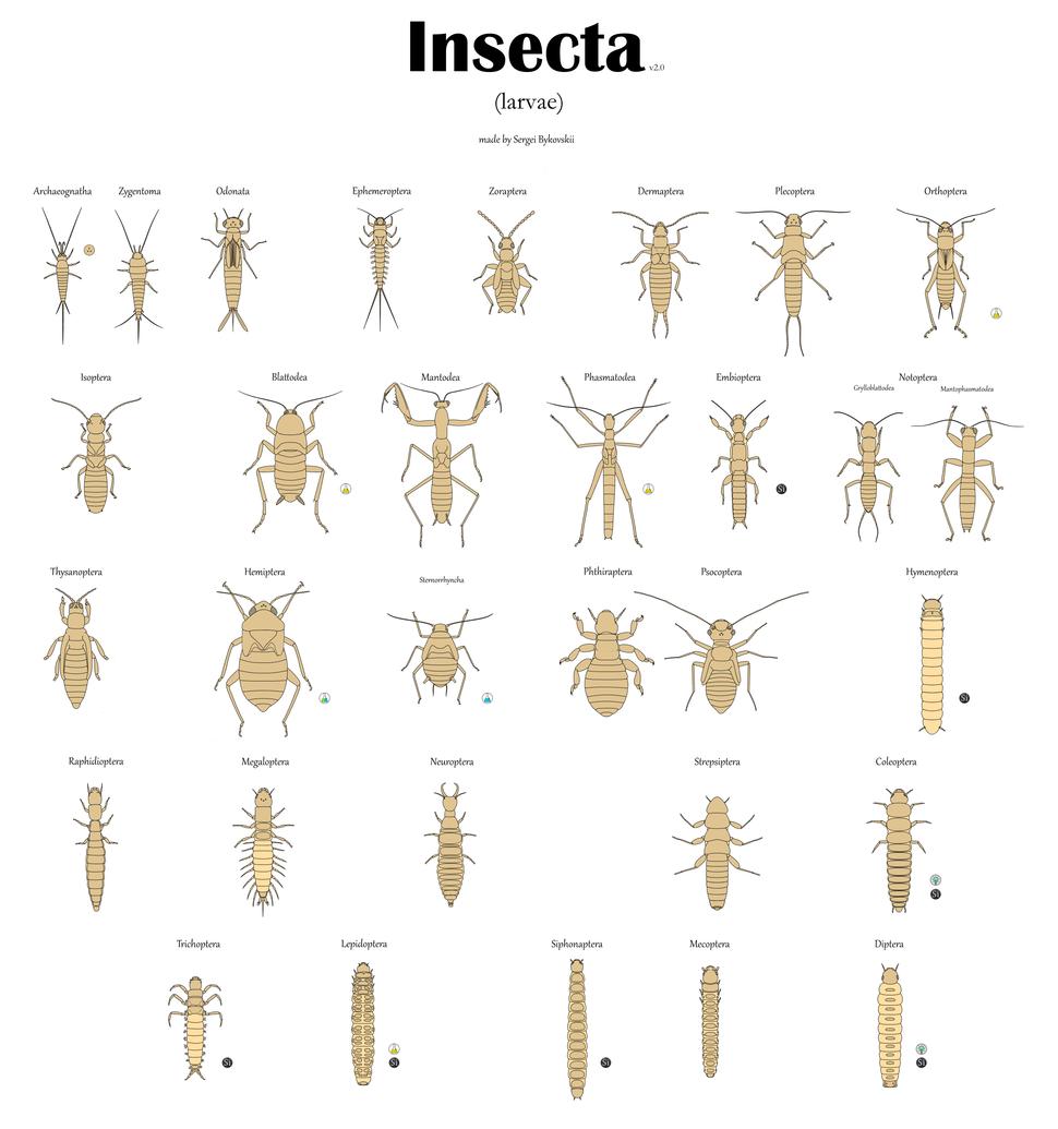 Все отряды насекомых Личинки v2.0