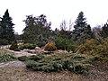 Вічнозелені рослини в ботсаду Харкова навесні.jpg