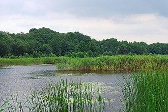 Holosiivskyi National Nature Park - Image: Госоївський парк