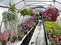 Красивые цветы - panoramio.jpg