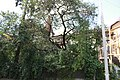 Моя Тернопільщина Місто305.jpg