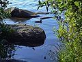 Озеро Шарташ - panoramio (5).jpg
