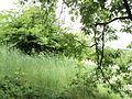 Парк шума Гази Баба во мај (110).JPG