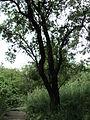 Парк шума Гази Баба во мај (98).JPG