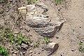 Скам'яніла деревина. Ділянка «Пчьолкінські закам'янілі дерева».jpg