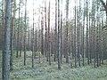 Сплав - panoramio (7).jpg